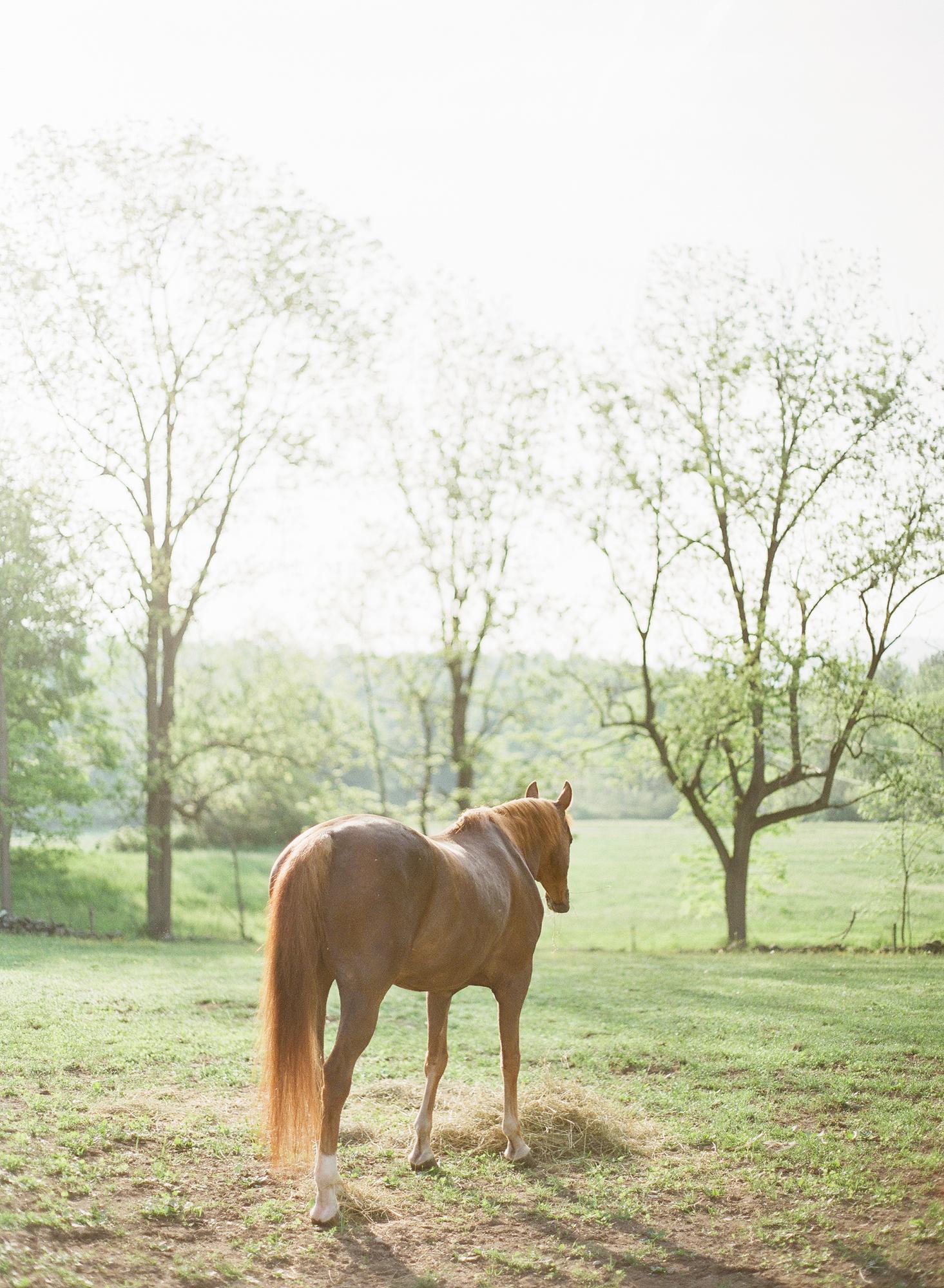 Horse Photography Saratoga Springs NY07.jpg