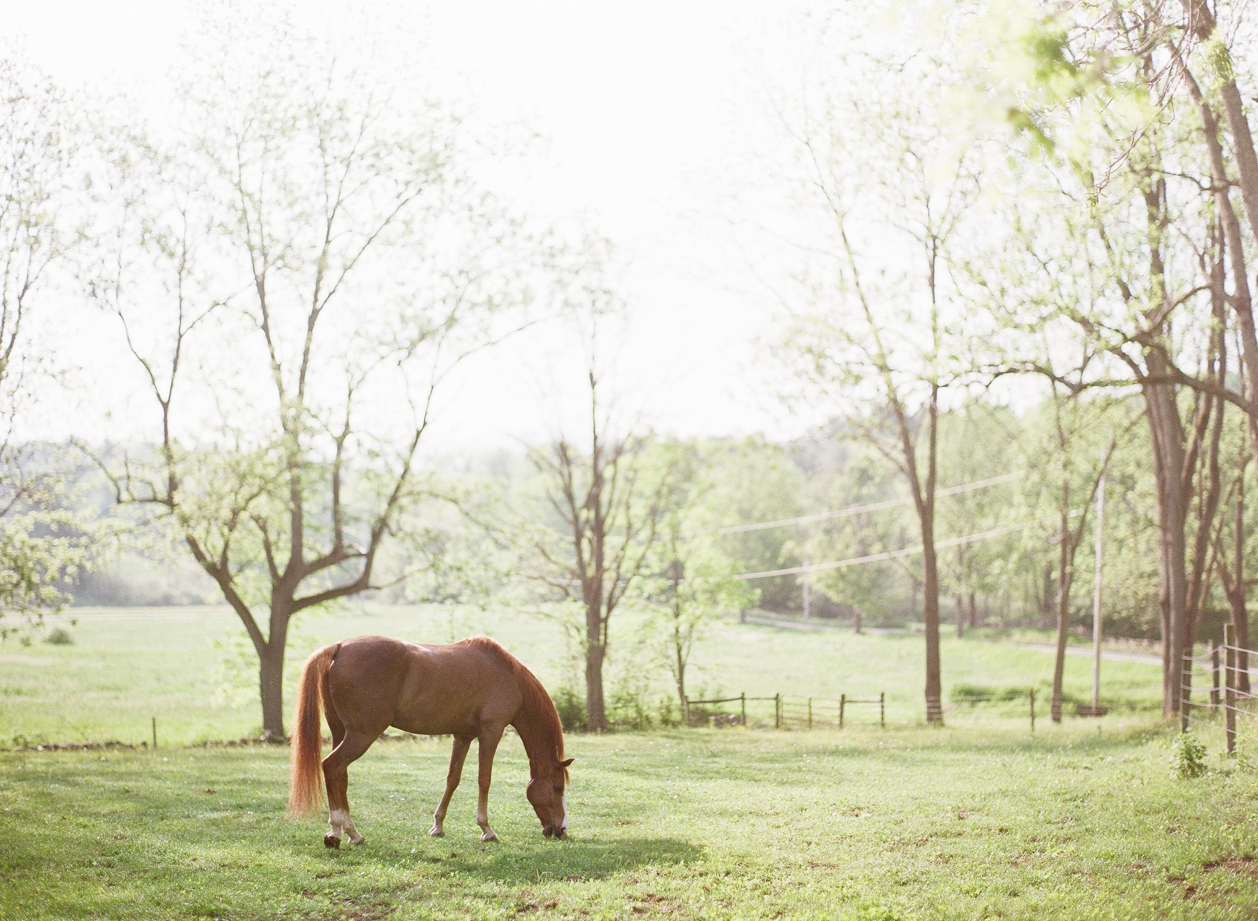 Horse Photography Saratoga Springs NY08.jpg