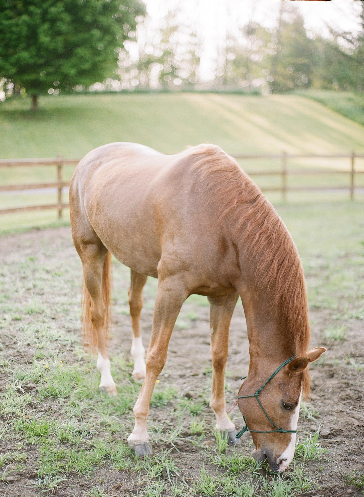 Horse Photography Saratoga Springs NY10.jpg