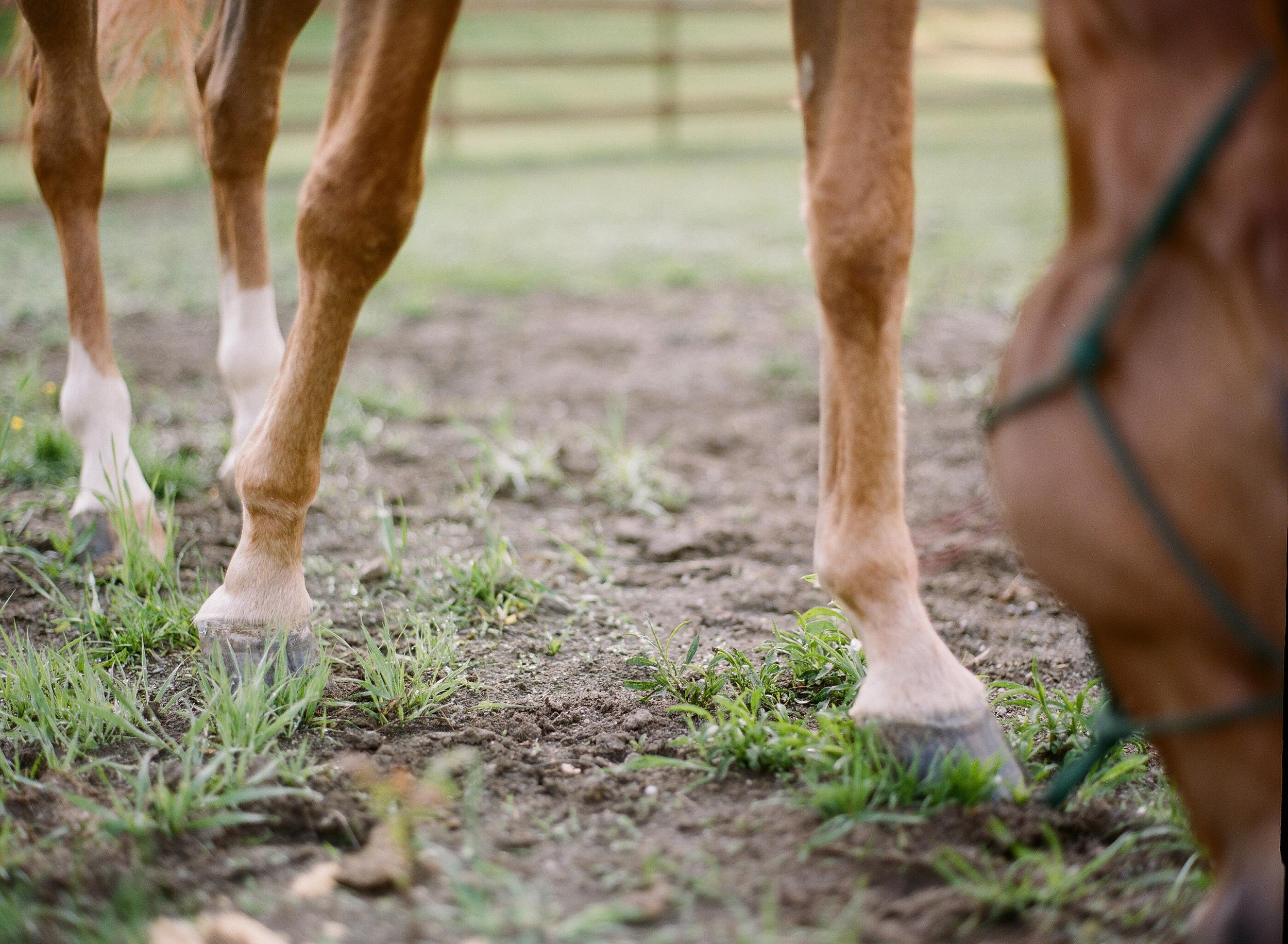 Horse Photography Saratoga Springs NY11.jpg