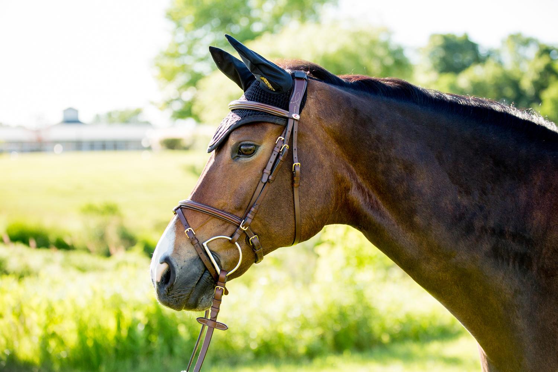 equestrian horse photography saratoga ny38.jpg