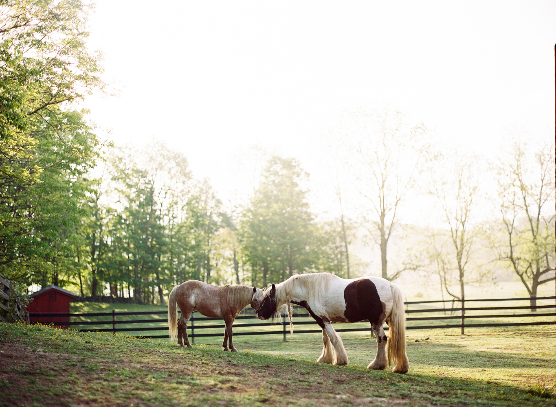 saratoga ny horse photographer25.jpg