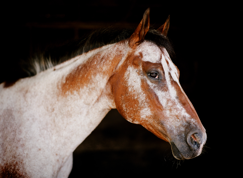 saratoga ny horse photographer27.jpg