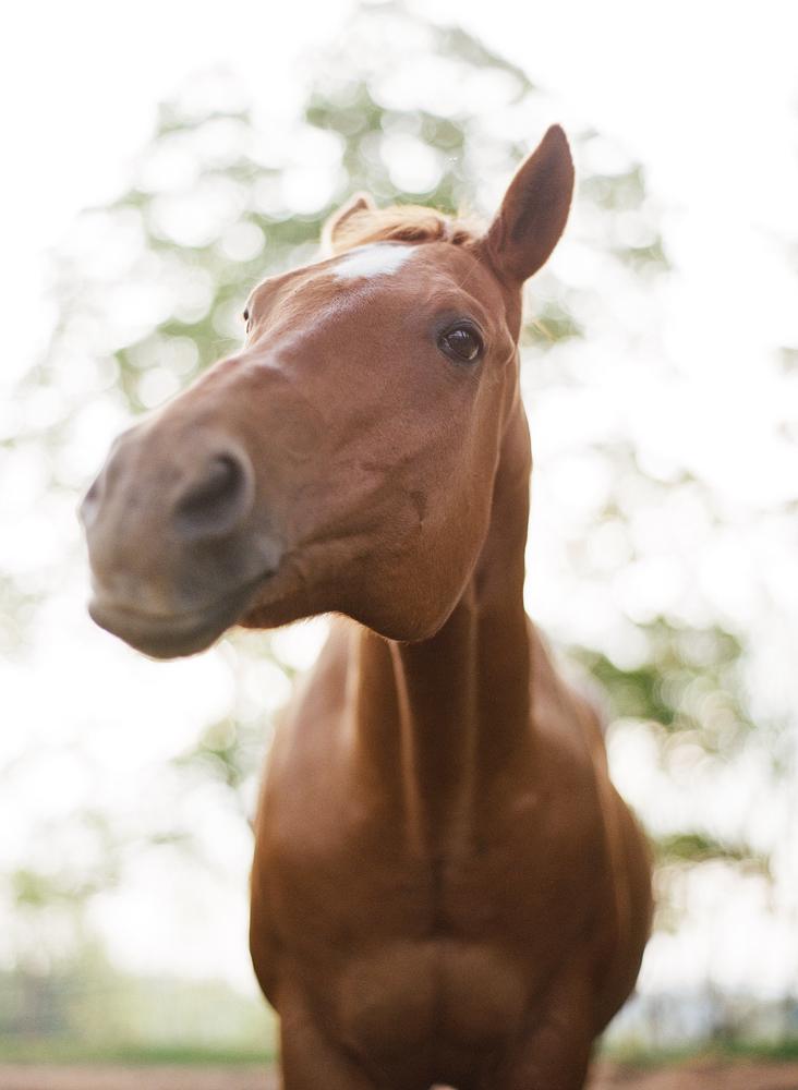 saratoga ny horse photographer33.jpg