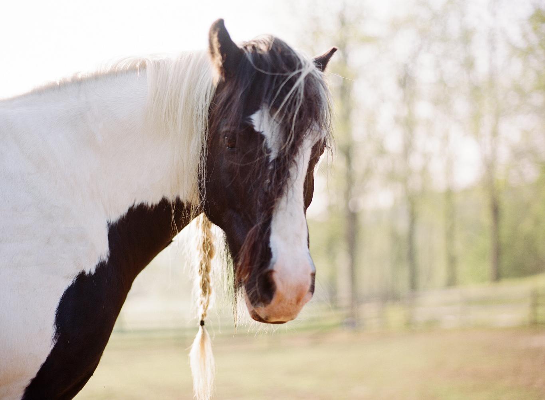saratoga ny horse photographer31.jpg