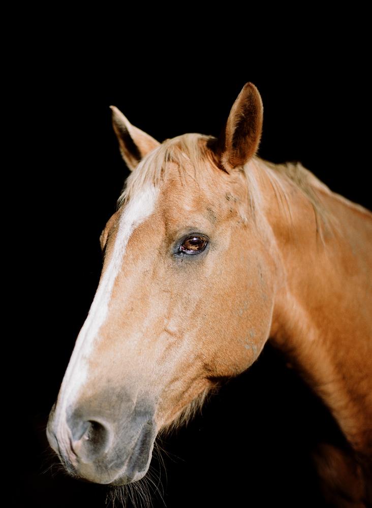 saratoga ny horse photographer35.jpg