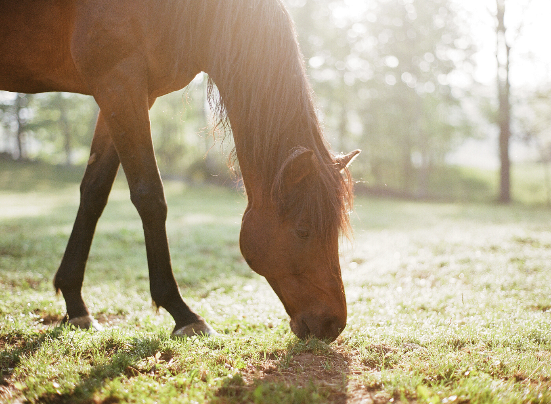 saratoga ny horse photographer37.jpg