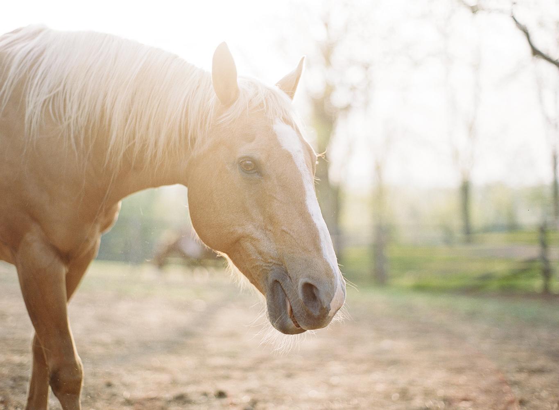 saratoga ny horse photographer38.jpg