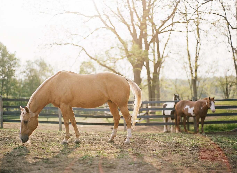 saratoga ny horse photographer39.jpg