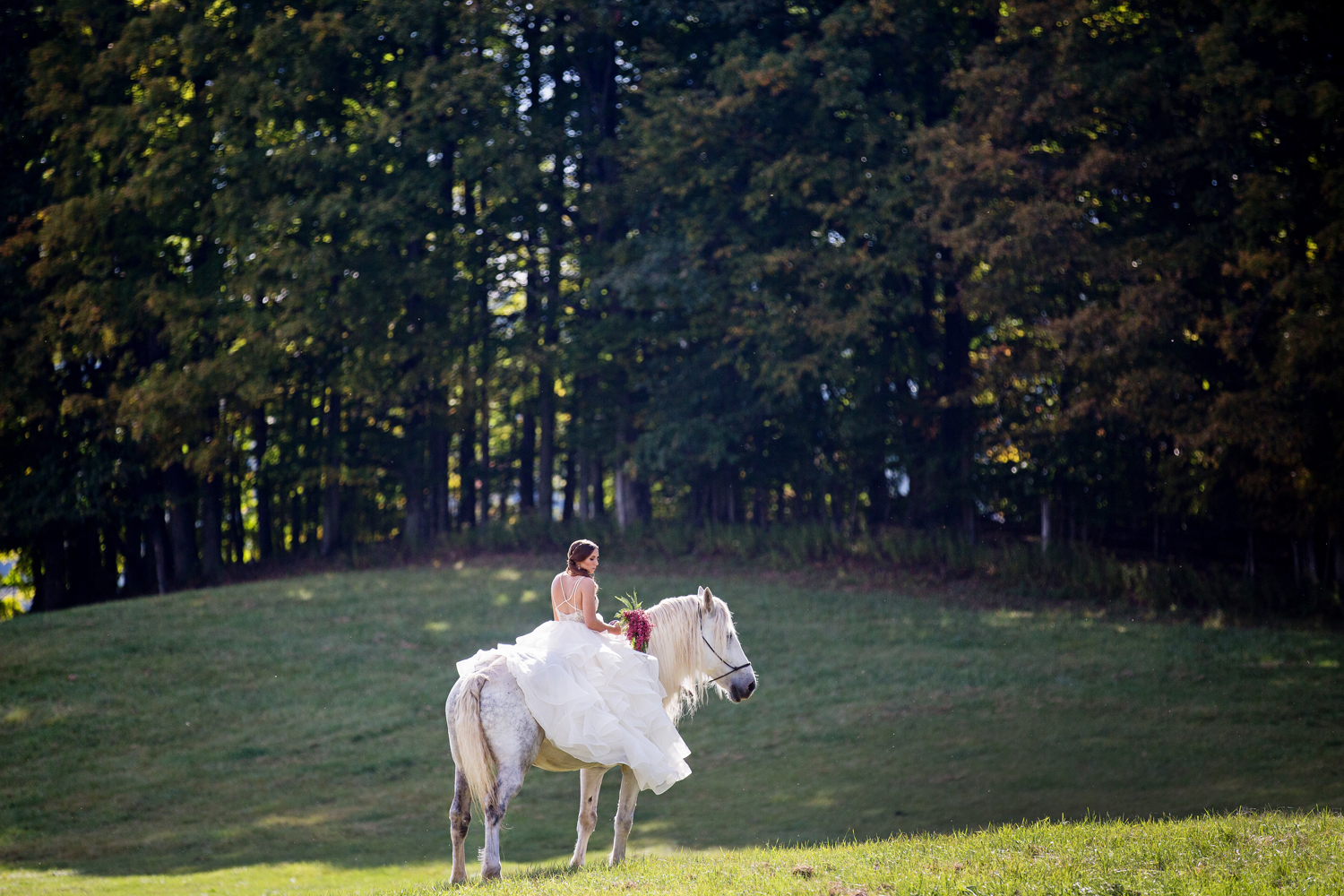 wedding horses saratoga ny51.jpg