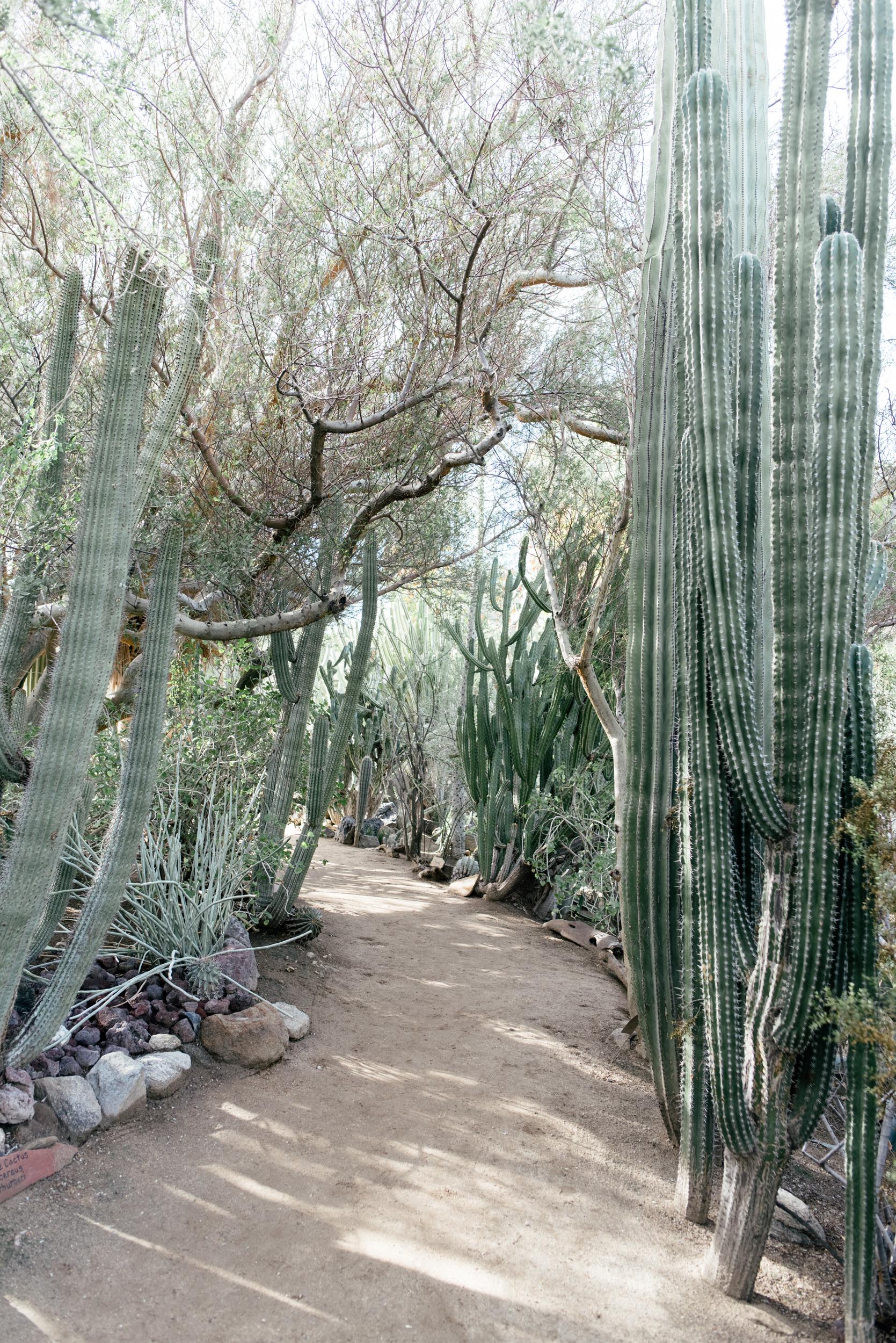palm-springs-18.jpg