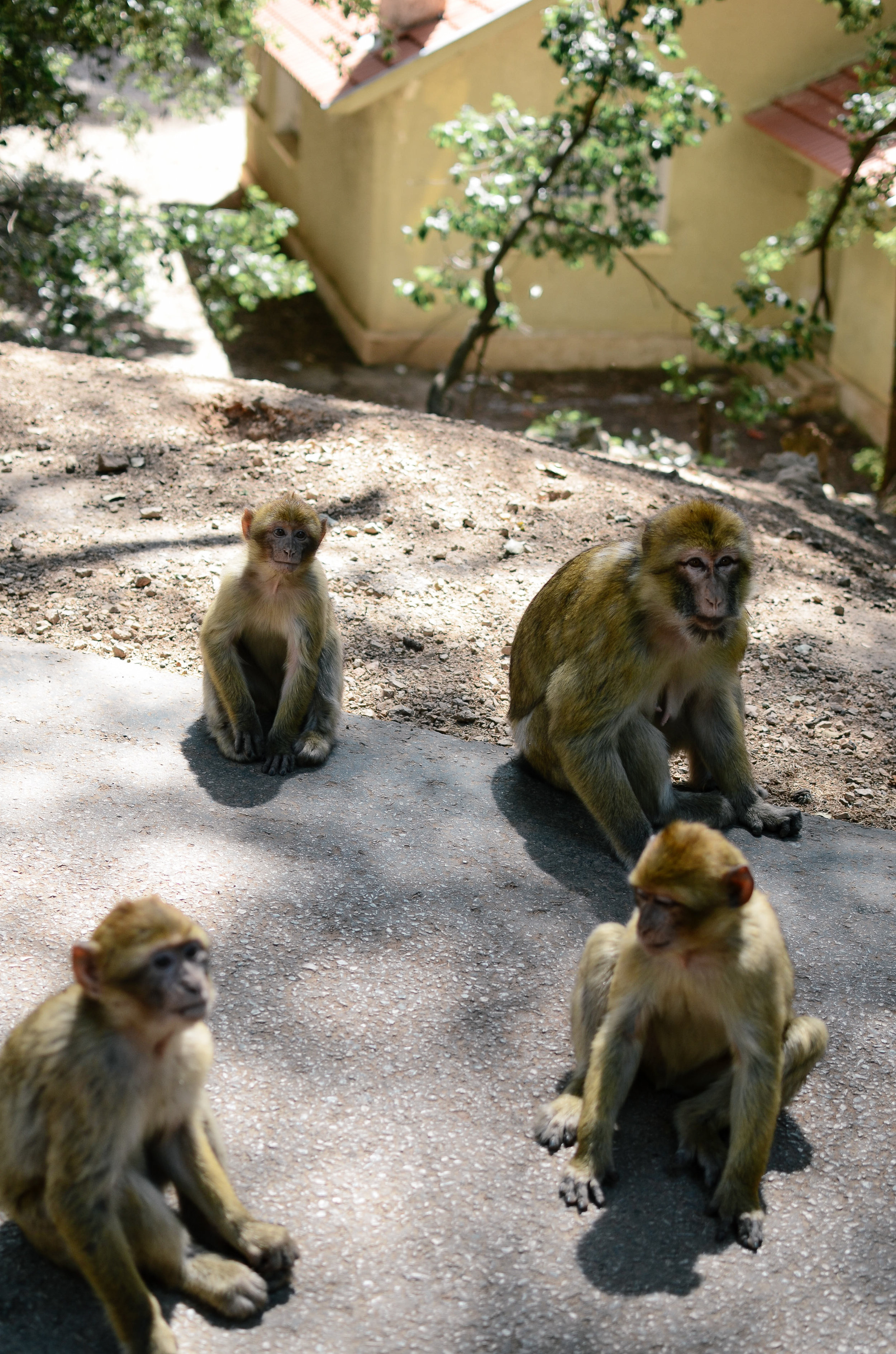 ^^ my first ever monkeys in the wild sighting!