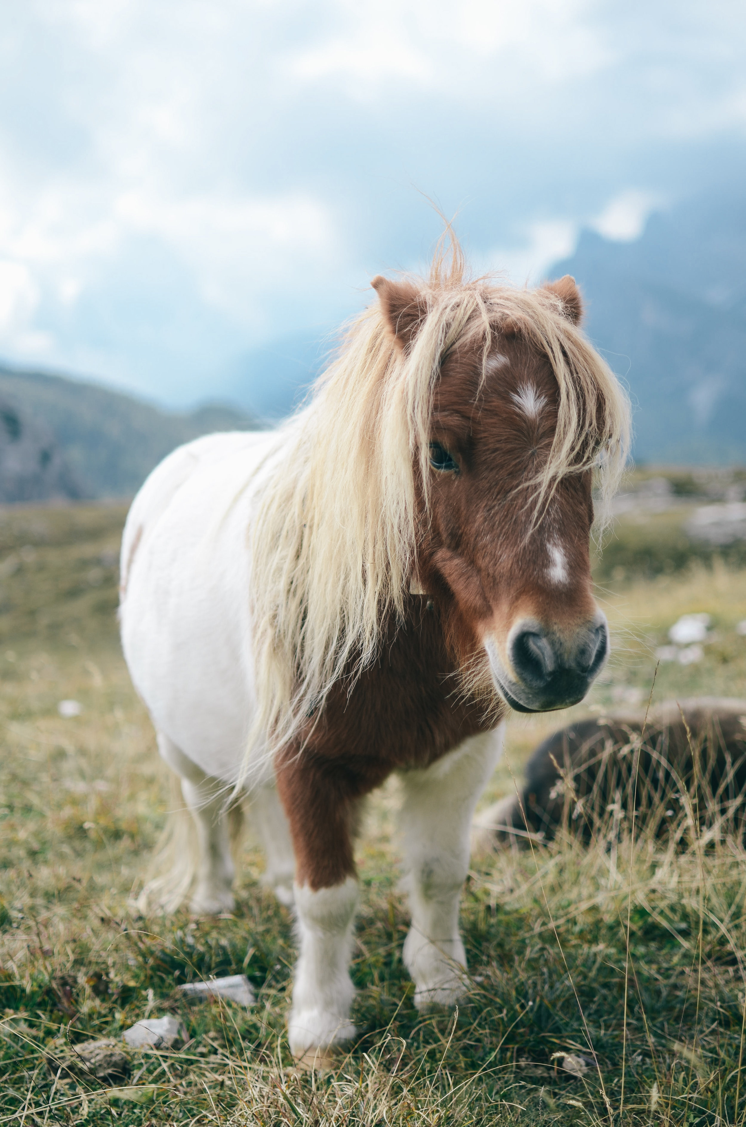 dolomites-why-the-italian-alps-should-be-your-next-mountain-adventure- travel-blog-tiny-horse.jpg