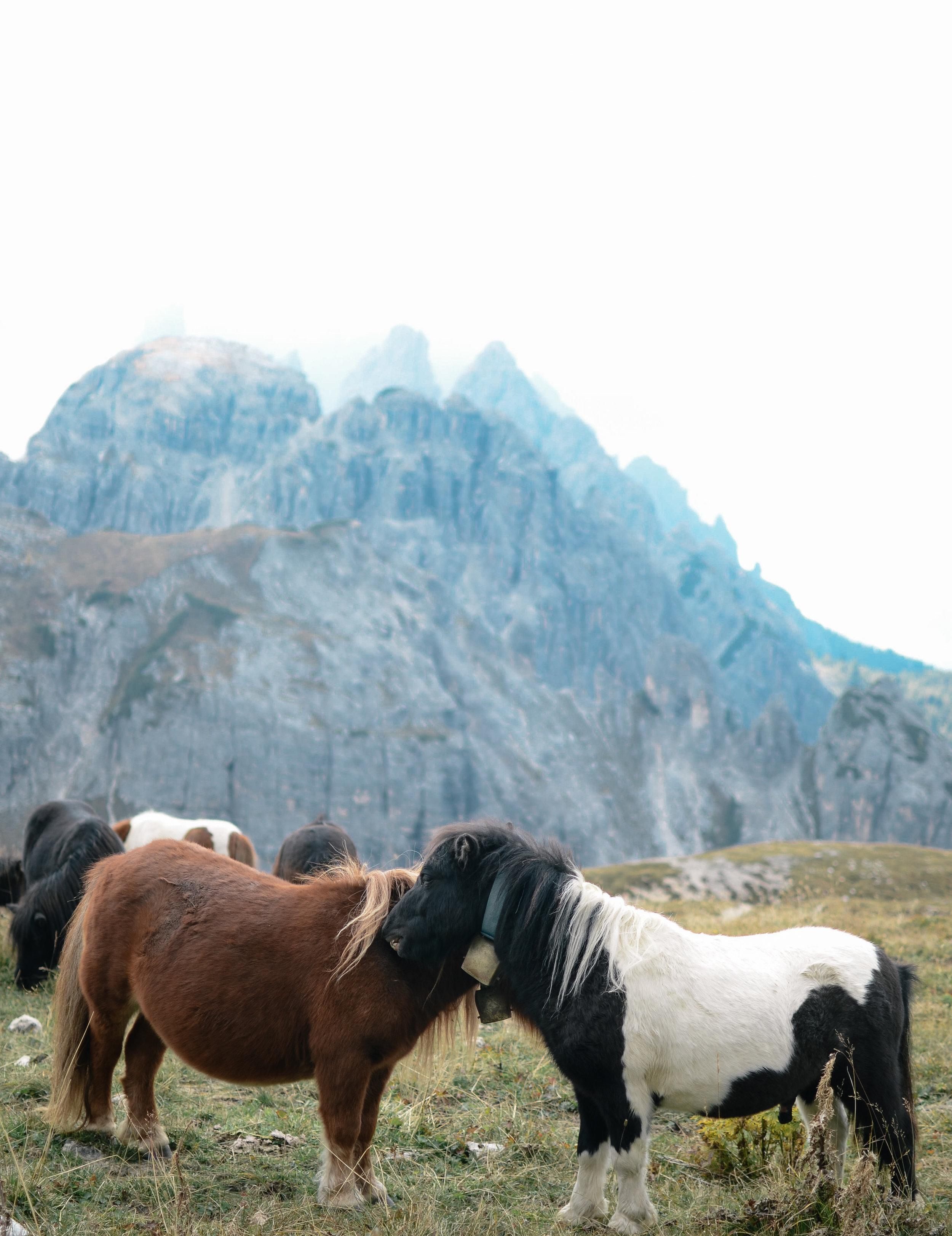 adventure-in-italy-3-hikes-dolomites-hiking-travel-blog-tyrol-9.jpg
