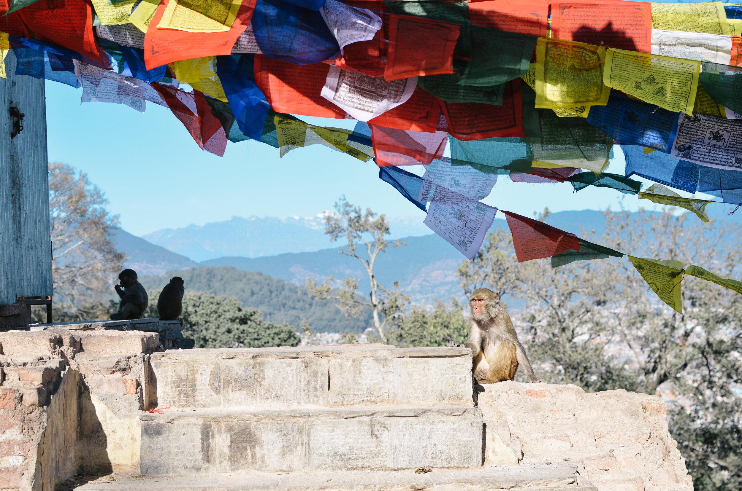 10-things-to-know-kathmandu-nepal-lifeonpine_DSC_1734.jpg