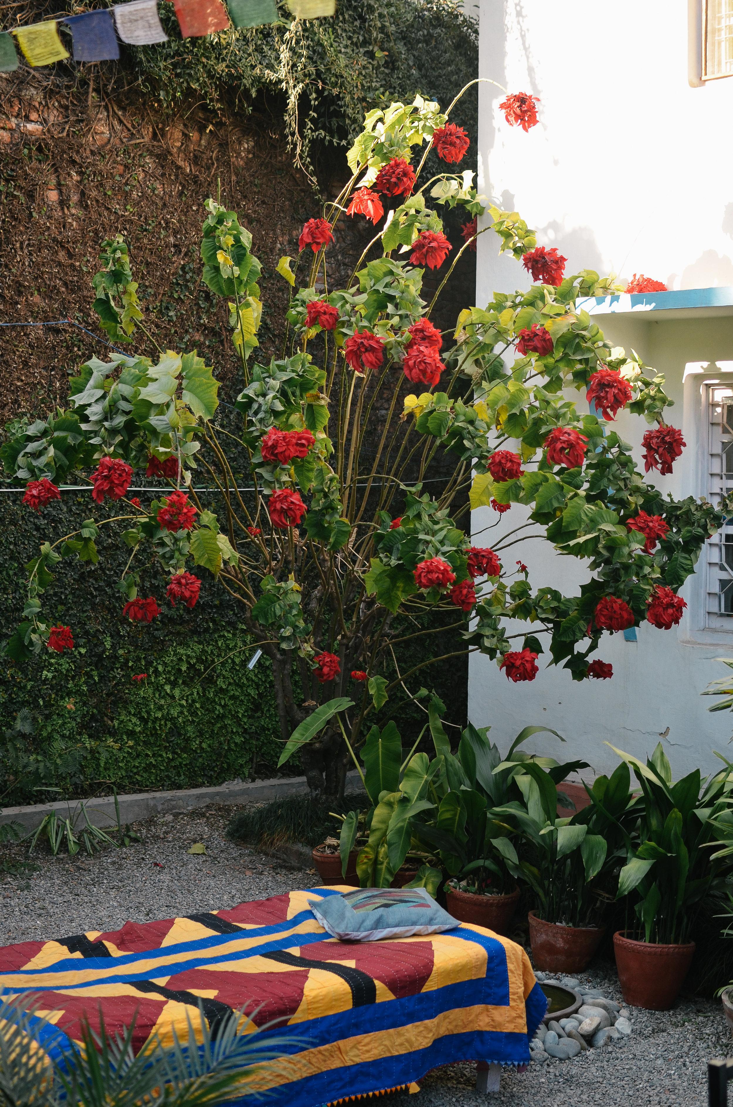 10-things-to-know-kathmandu-nepal-lifeonpine_DSC_0556.jpg