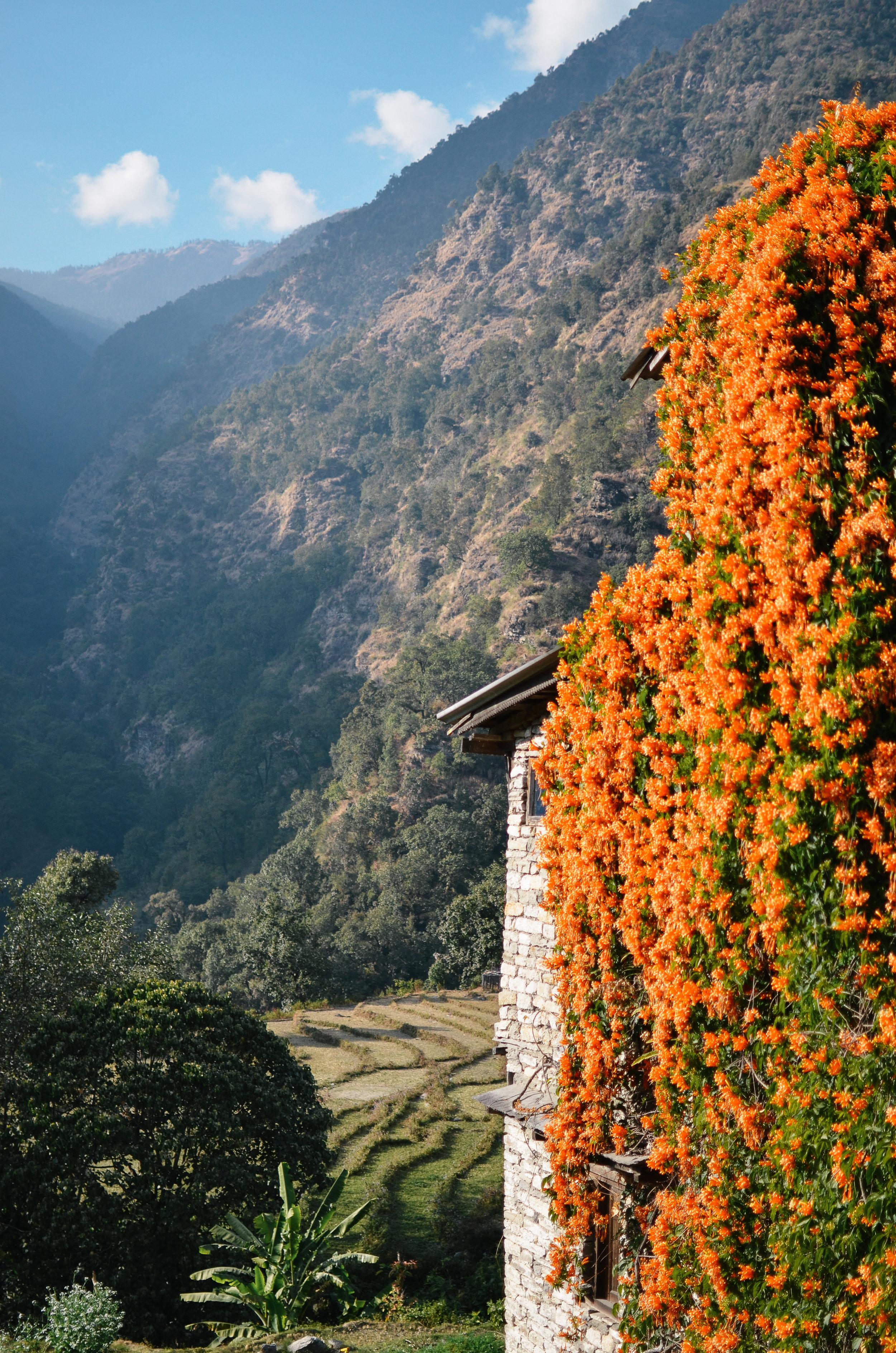 nepal-trek-annapurna_DSC_1173.jpg