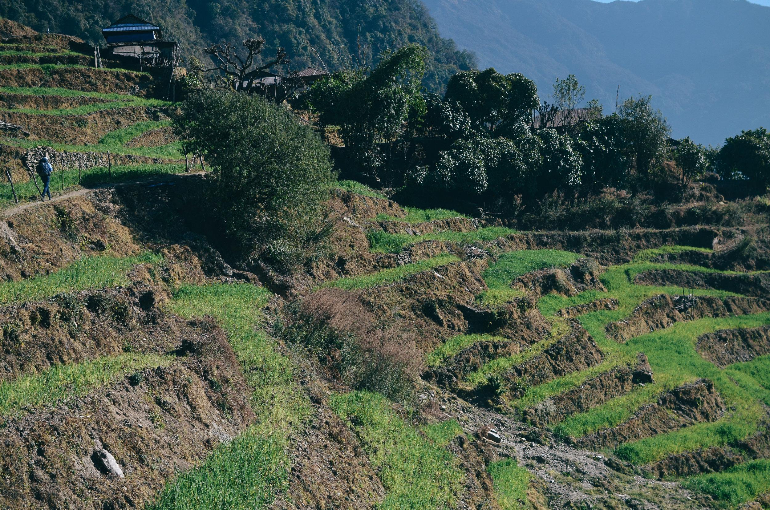 nepal-trek-annapurna_DSC_1563.jpg