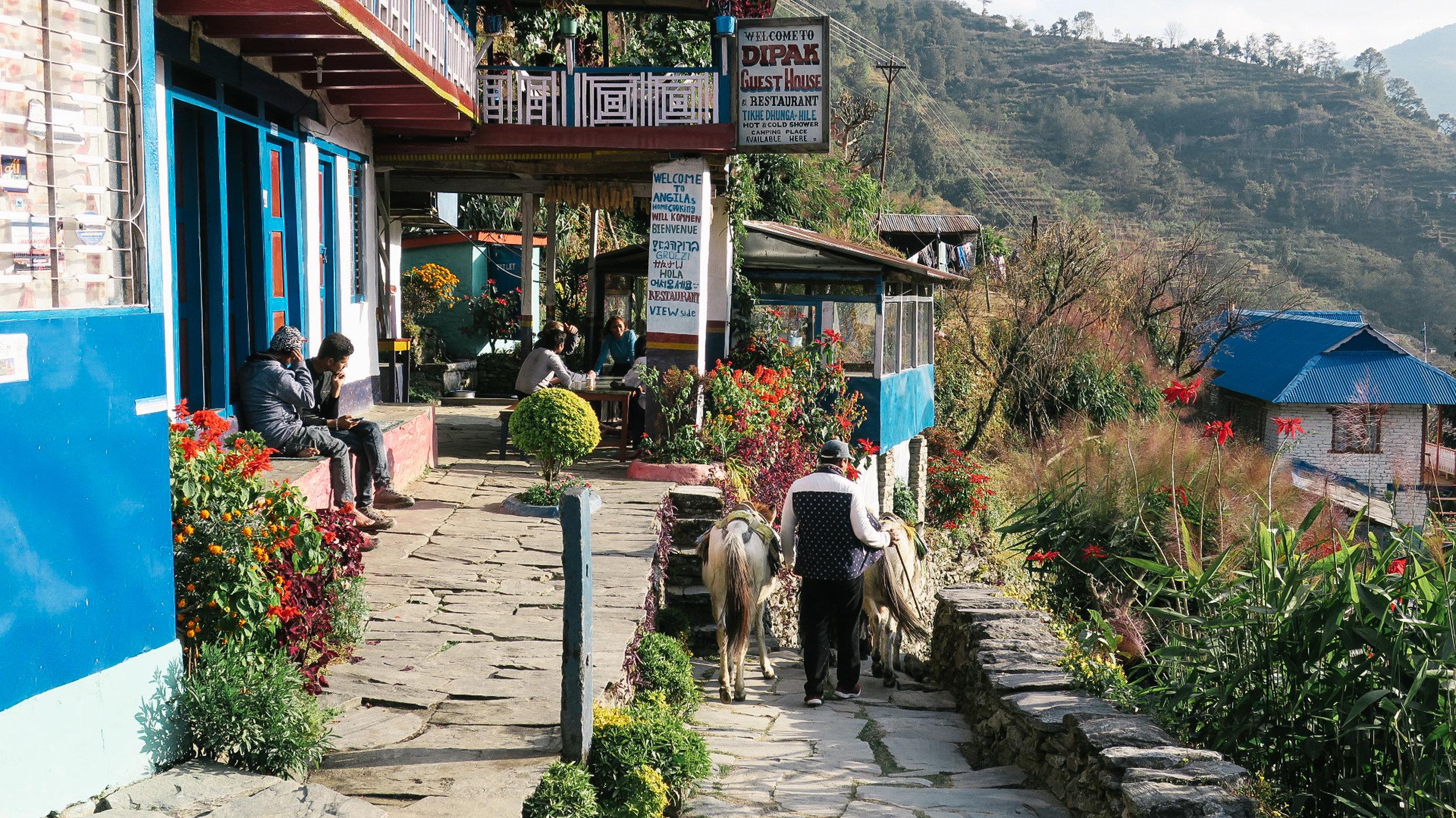 nepal-trek-annapurna_1_day_trekking_nepal_1.jpg