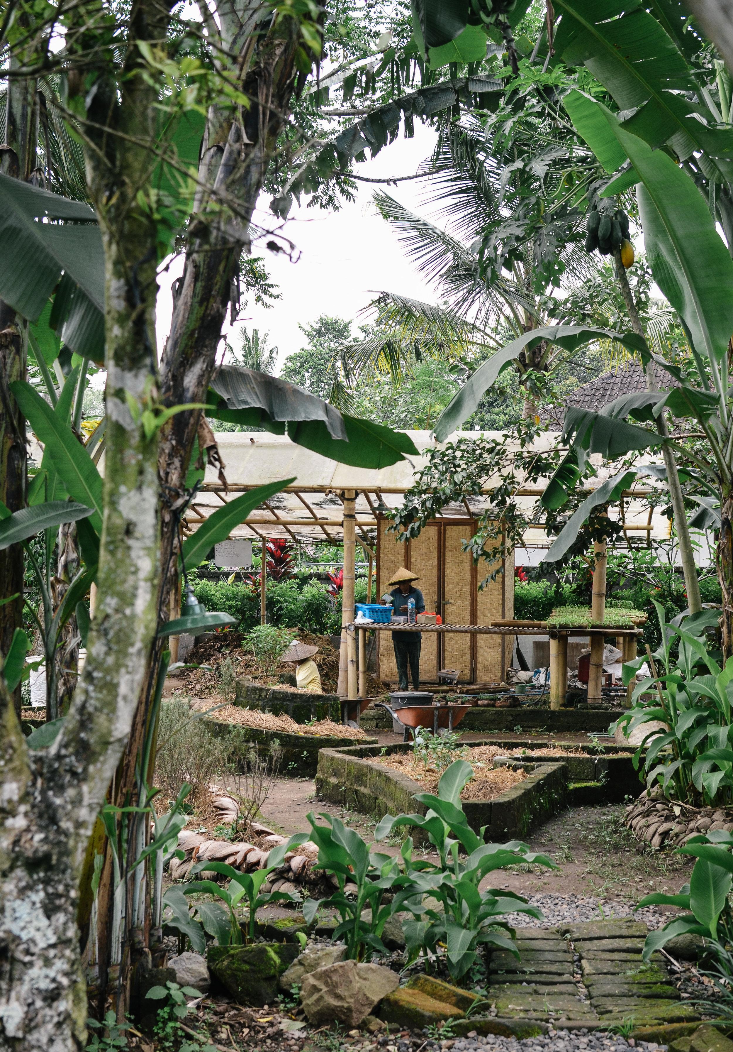 bali+mosca+bamboo+lodge+bali+ubud+lifeonpine_DSC_2741.jpg