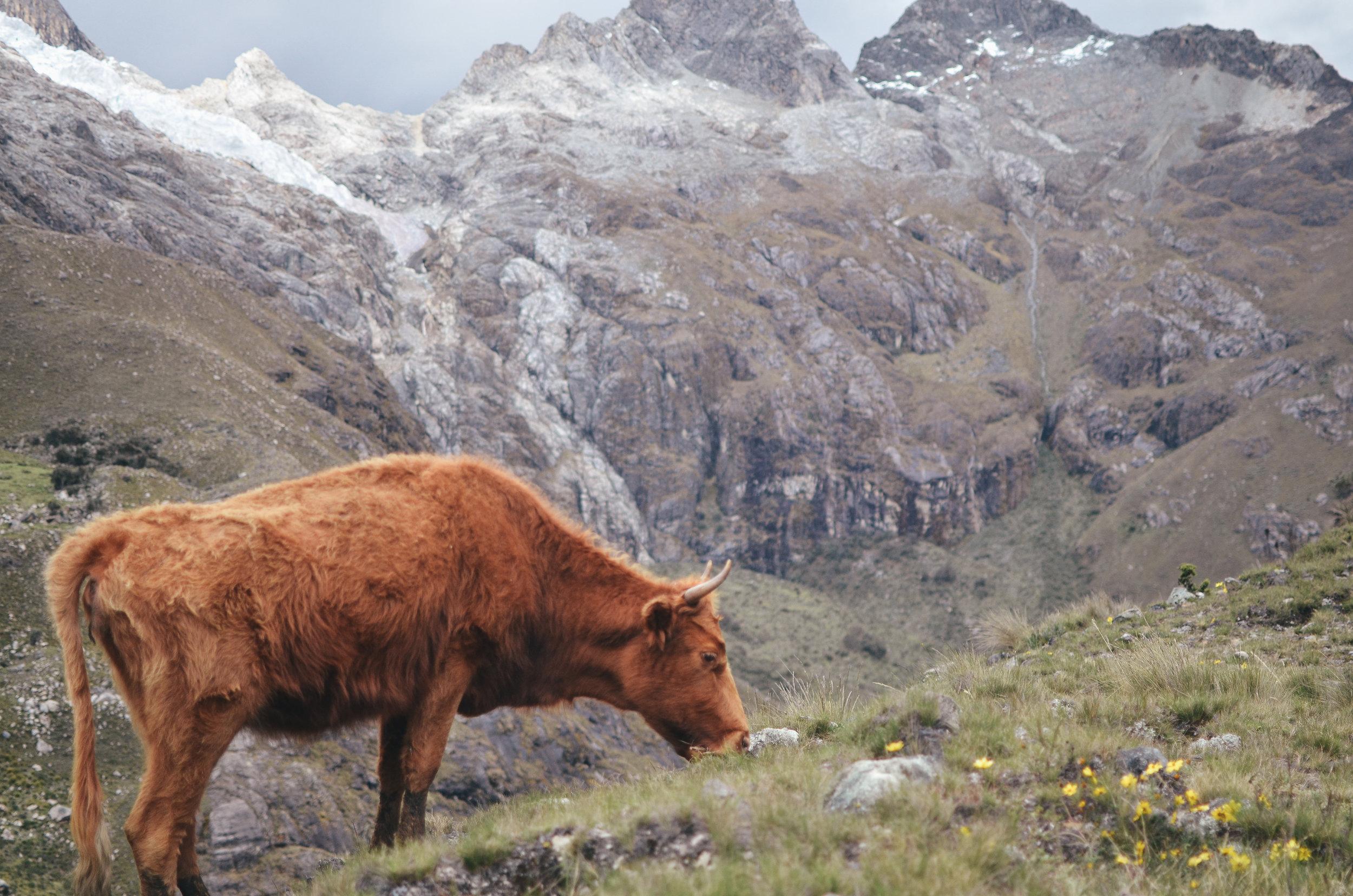 laguna+lake+69+hike+peru+travel+guide+life+on+pine_DSC_0633.jpg