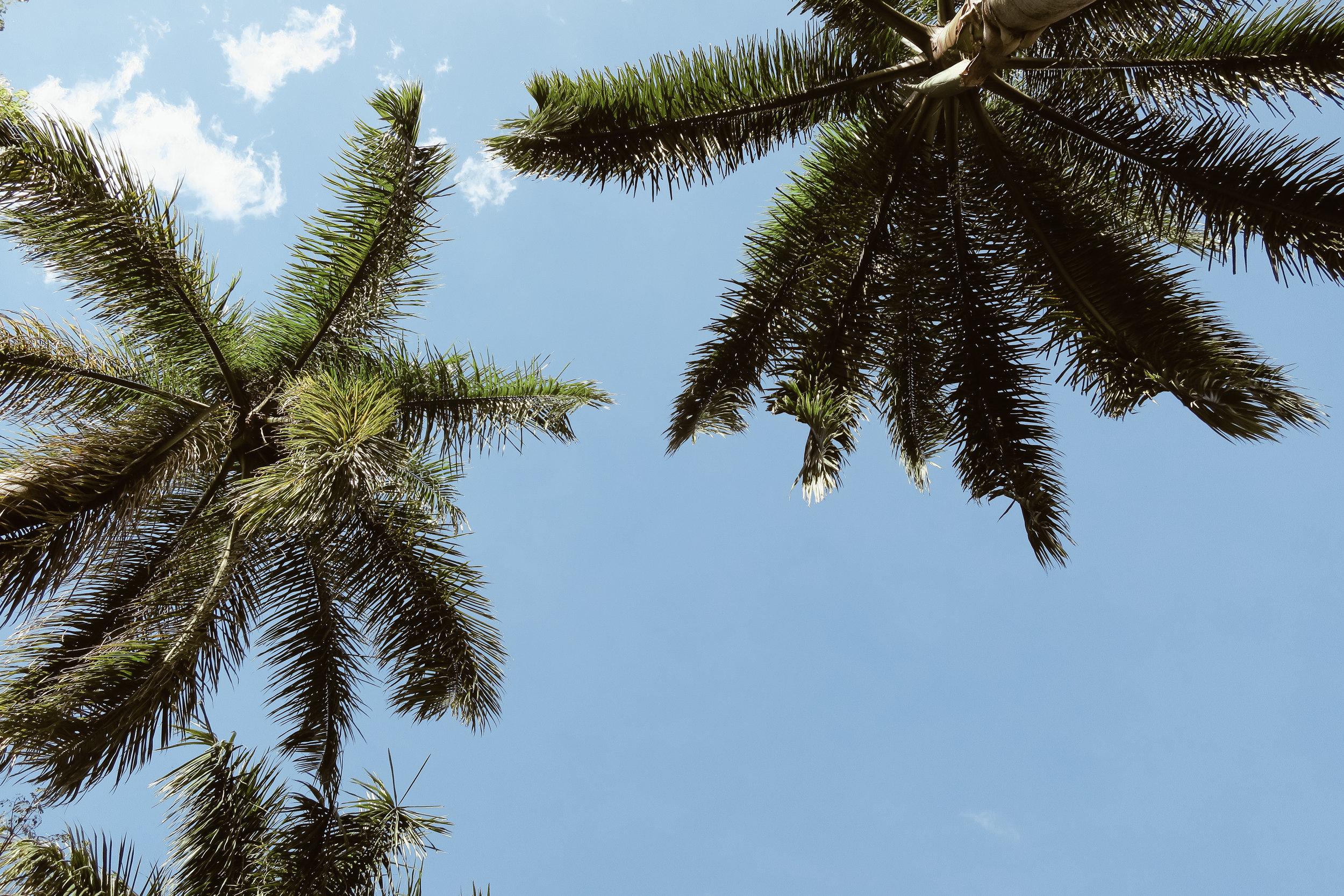 Hacienda+Bambusa+Coffee+Farm+Colombia_Life_on_Pine_IMG_2757.jpg