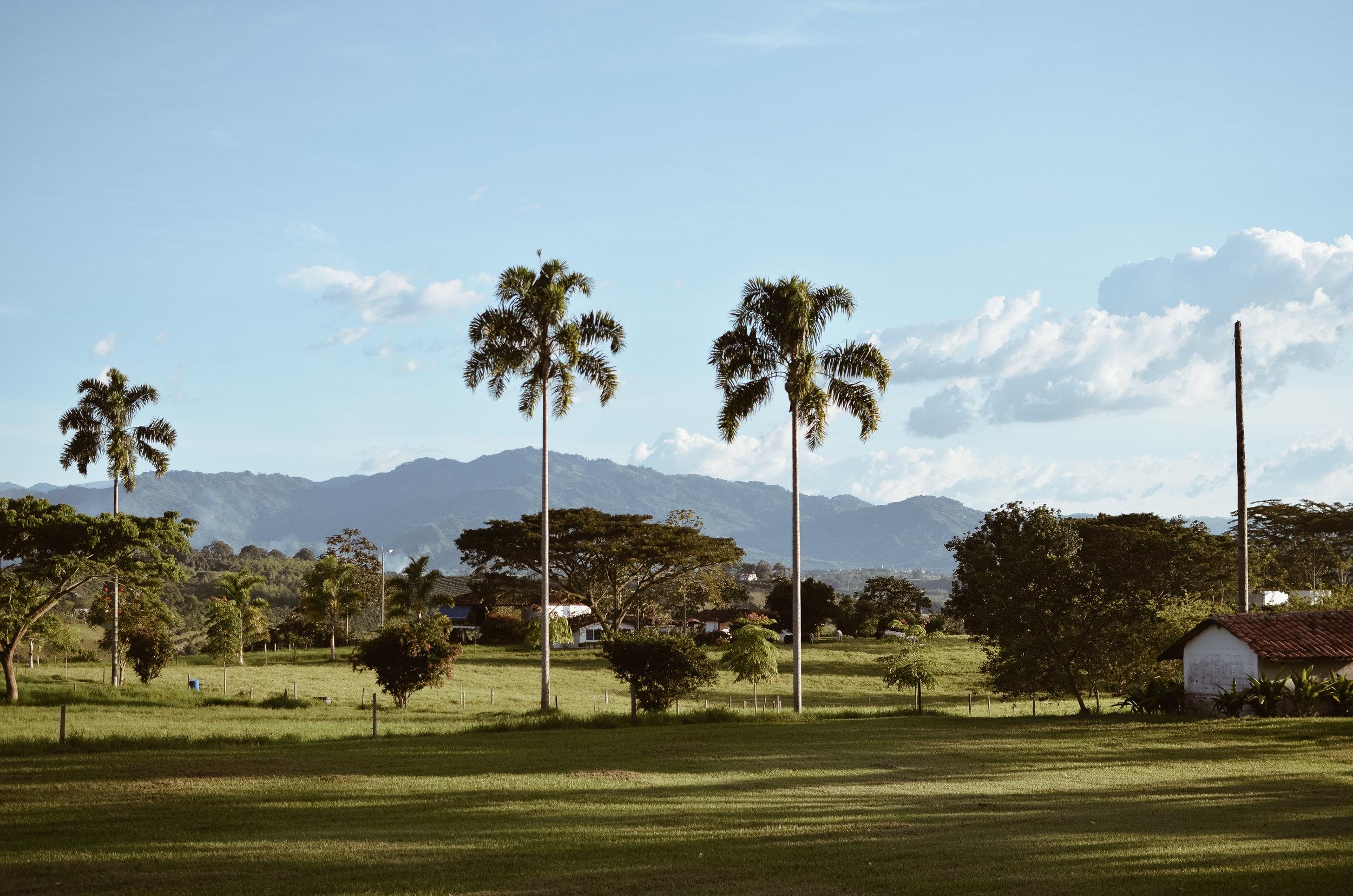 Hacienda+Bambusa+Coffee+Farm+Colombia_Life_on_Pine_DSC_0298.jpg