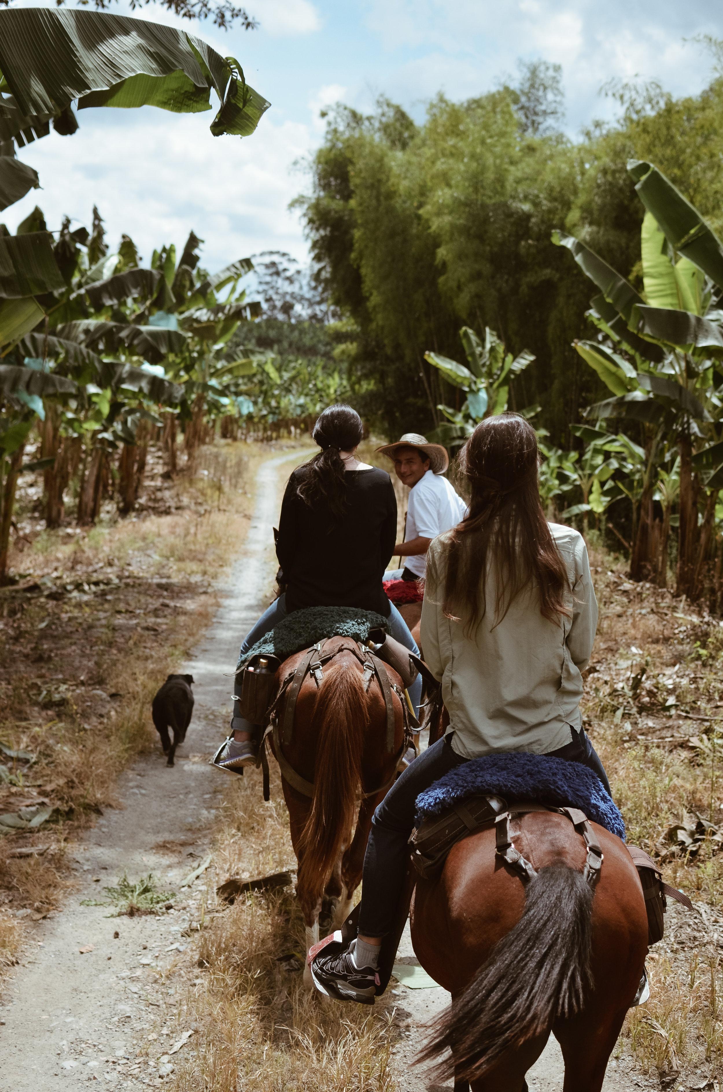Hacienda+Bambusa+Coffee+Farm+Colombia_Life_on_Pine_DSC_0546.jpg