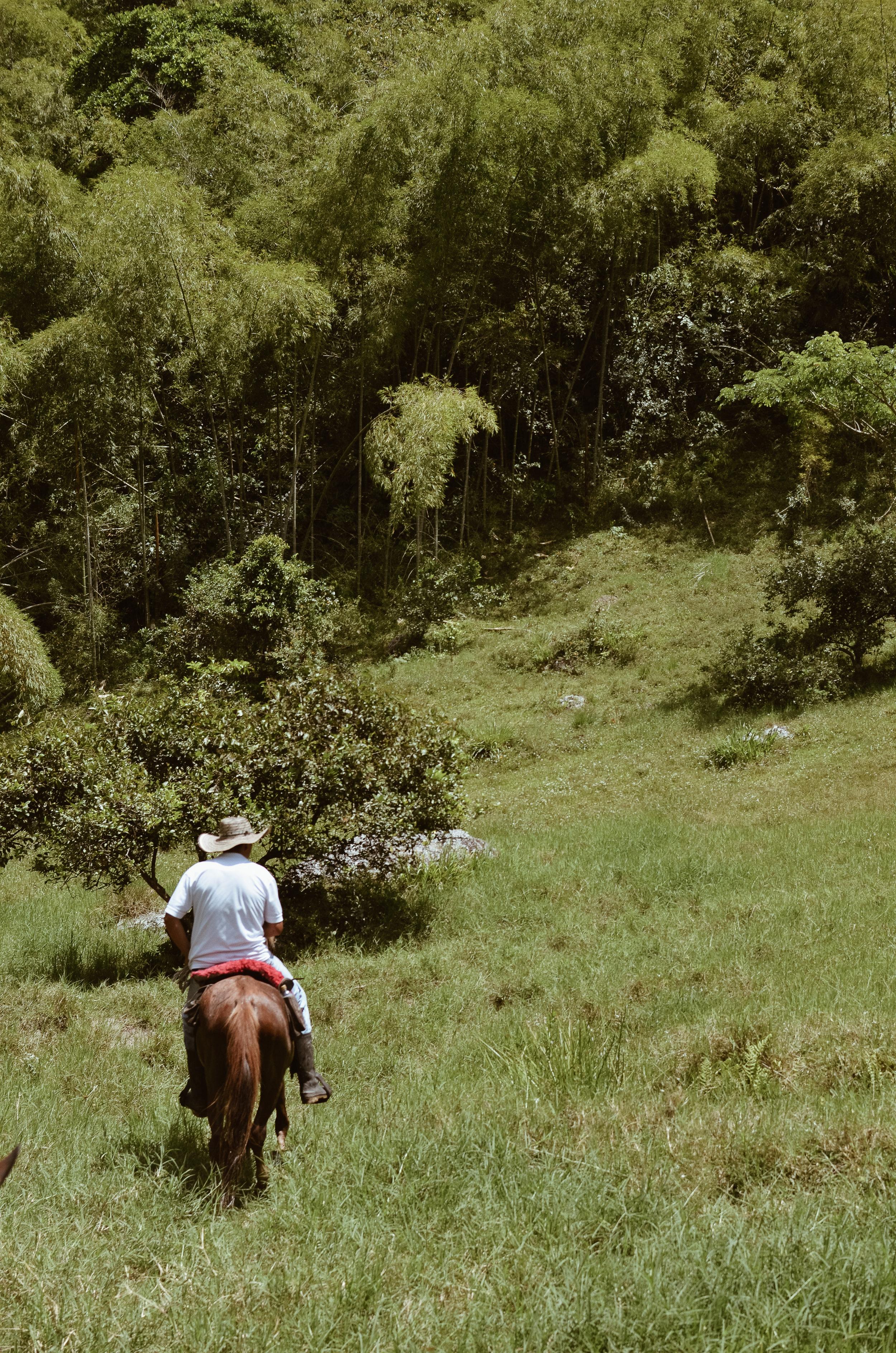 Hacienda+Bambusa+Coffee+Farm+Colombia_Life_on_Pine_DSC_0592.jpg