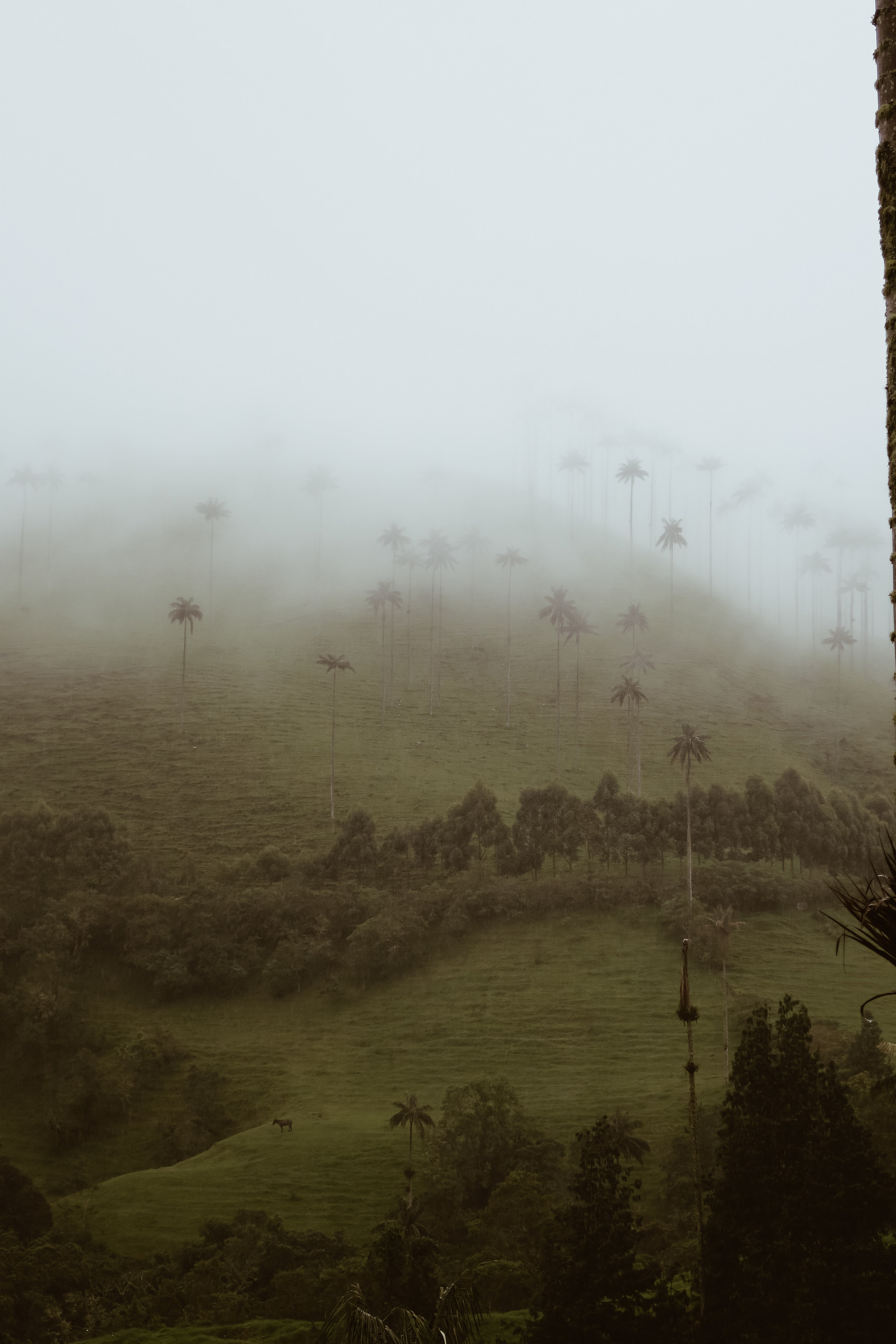 cocora+valley+hike+salento+colombia_IMG_2916.jpg