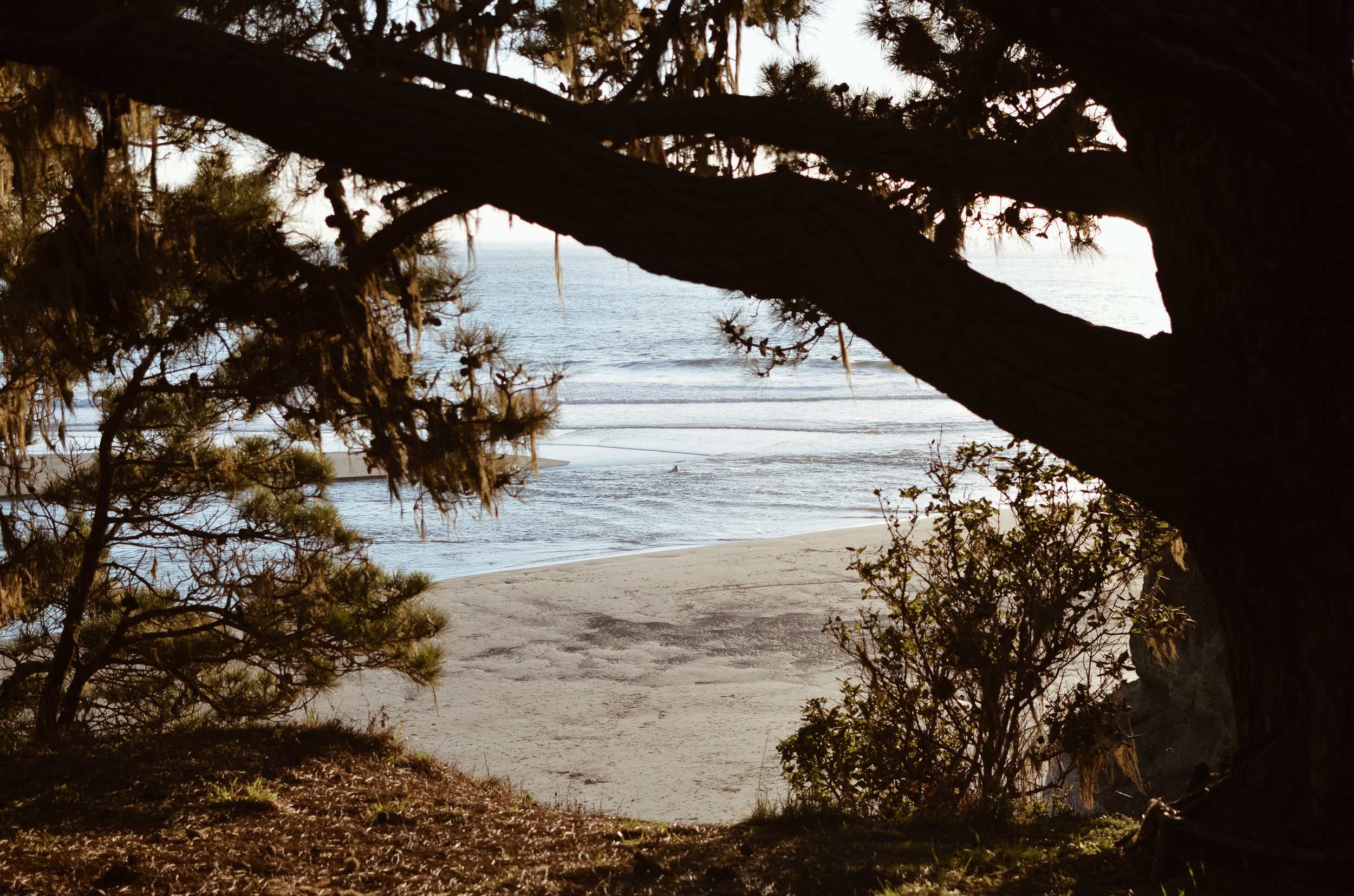 mendocino+kate+parrish+life+on+pine_DSC_0066.jpg