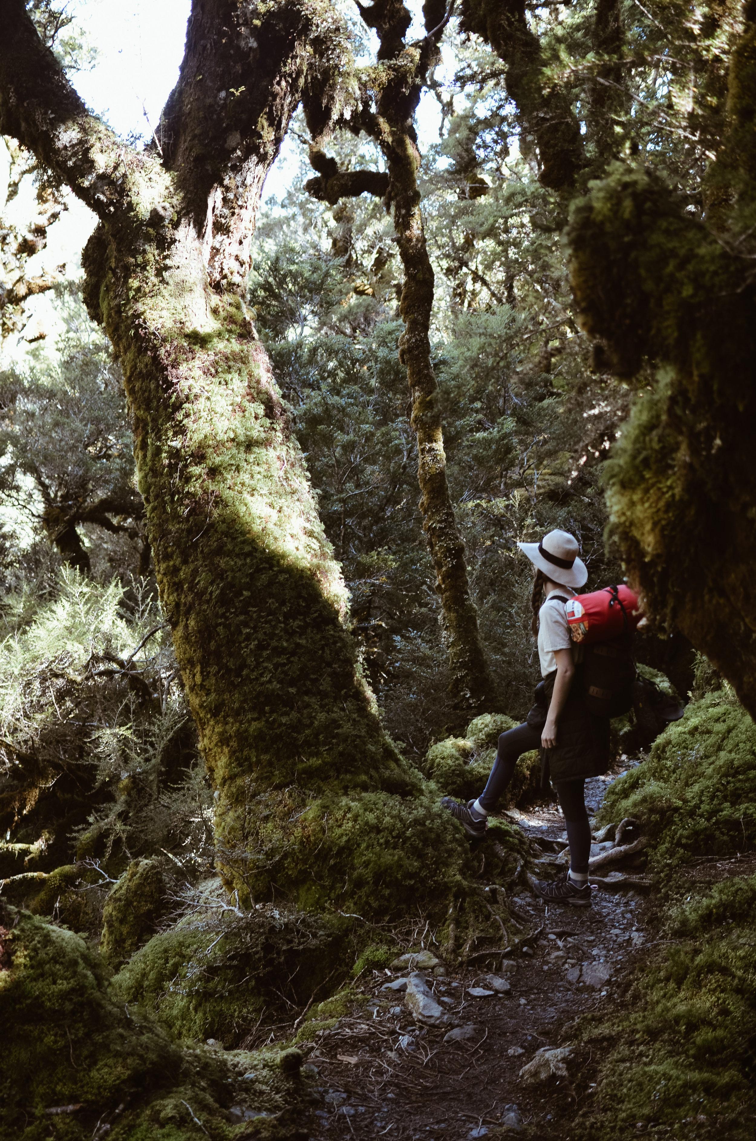 routeburn+track+new+zealand+kate+parrish+life+on+pine_DSC_0815.jpg