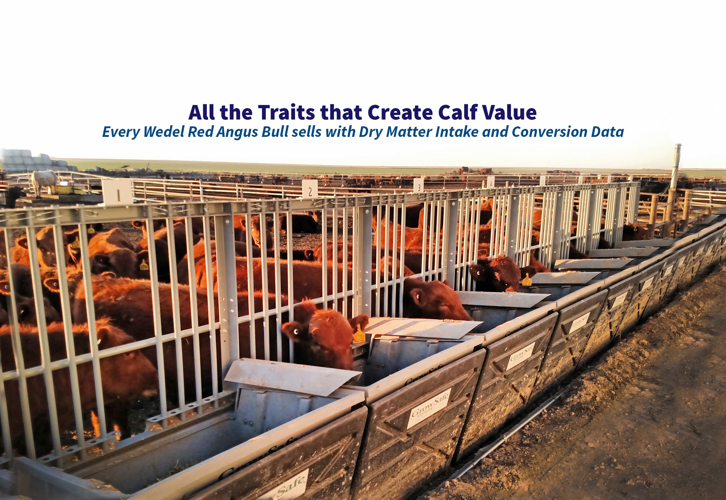 Learn more about Feed Efficiency