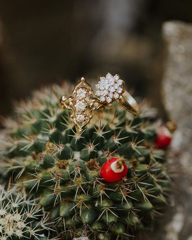 Y'all love the sparkle and shine, I love the plants and spikes. So naturally atop this cactus seemed like the most ideal ring shot while gawking over all the Guatemalan plants.  #nativedreamerlove #ringshot