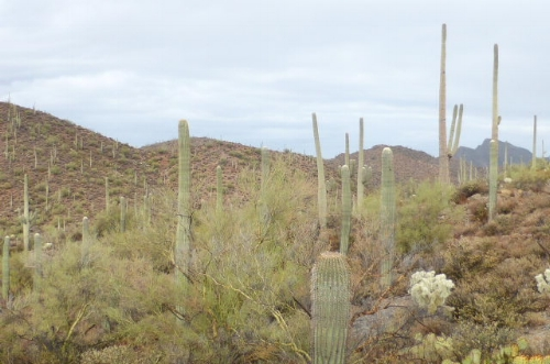 Saguaro national park 2018.JPG