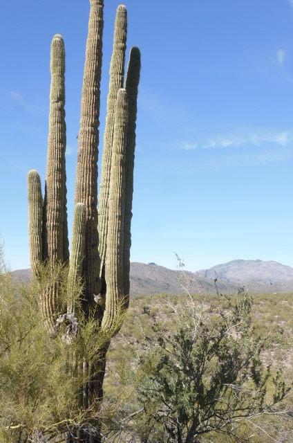 cactus surprise 2.JPG