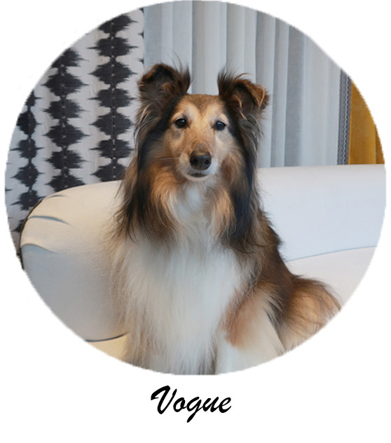 As you all know Vogue has quite a presence at Window Workshop. Our own little door bell that loves to greet our clients in a vocal manner. Once she gets to know you, she will expect lots of attention and a belly rub!