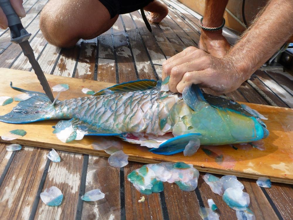 Parrotfish dinner - Palmerston Atoll.jpg