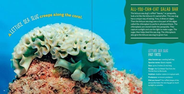 Sea-Food2.jpg