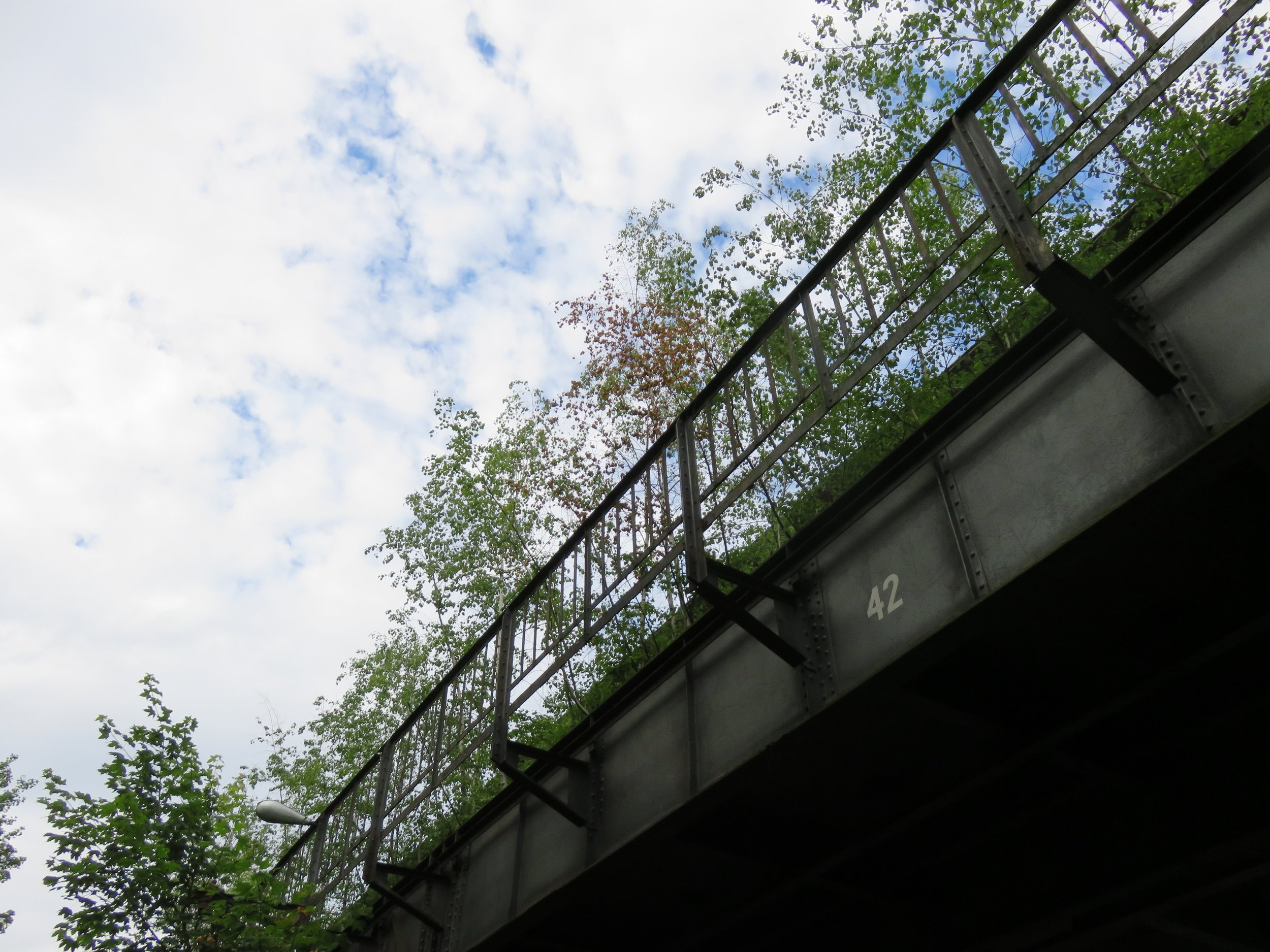 Trees growing on the abandoned tracks near the former Wernerwerk station, visible from street level.