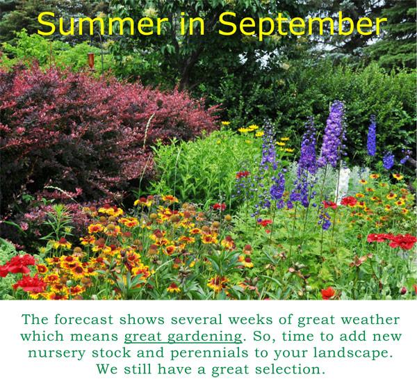 Summer-in-September-2017-.jpg