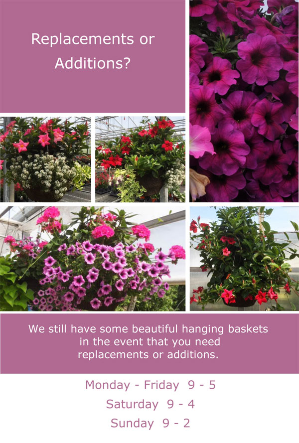 Still-Have-Hanging-Baskets-2018.jpg