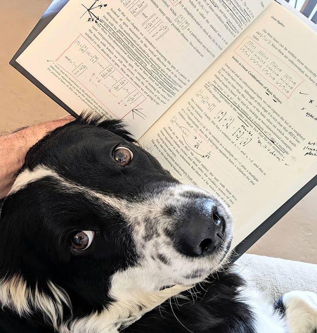 Bongo unimpressed with the whole reading thing. #helperdog #letsgoout #quantumcomputing