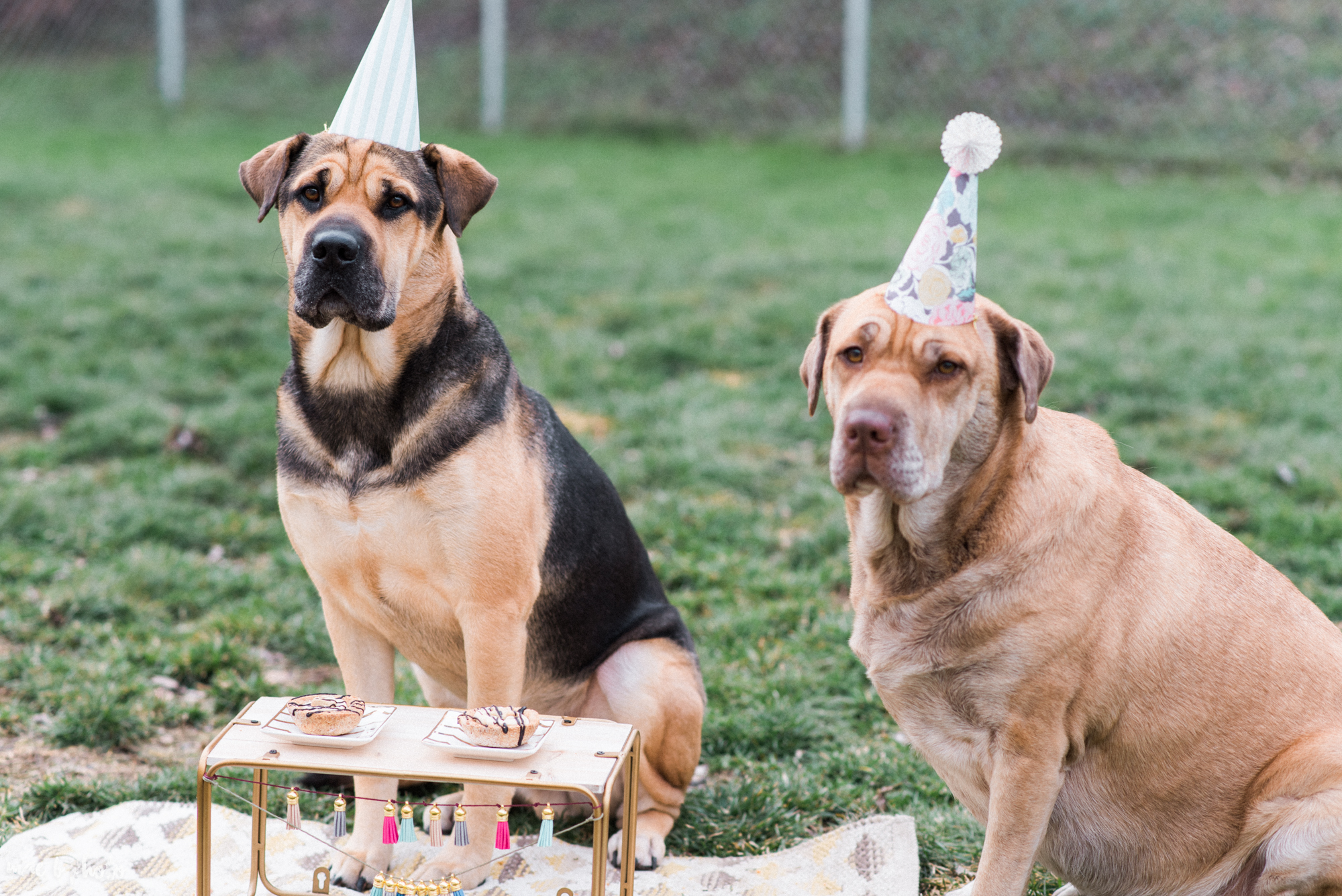Meat & Sophie's 5th birthday party in youngstown ohio-18.jpg