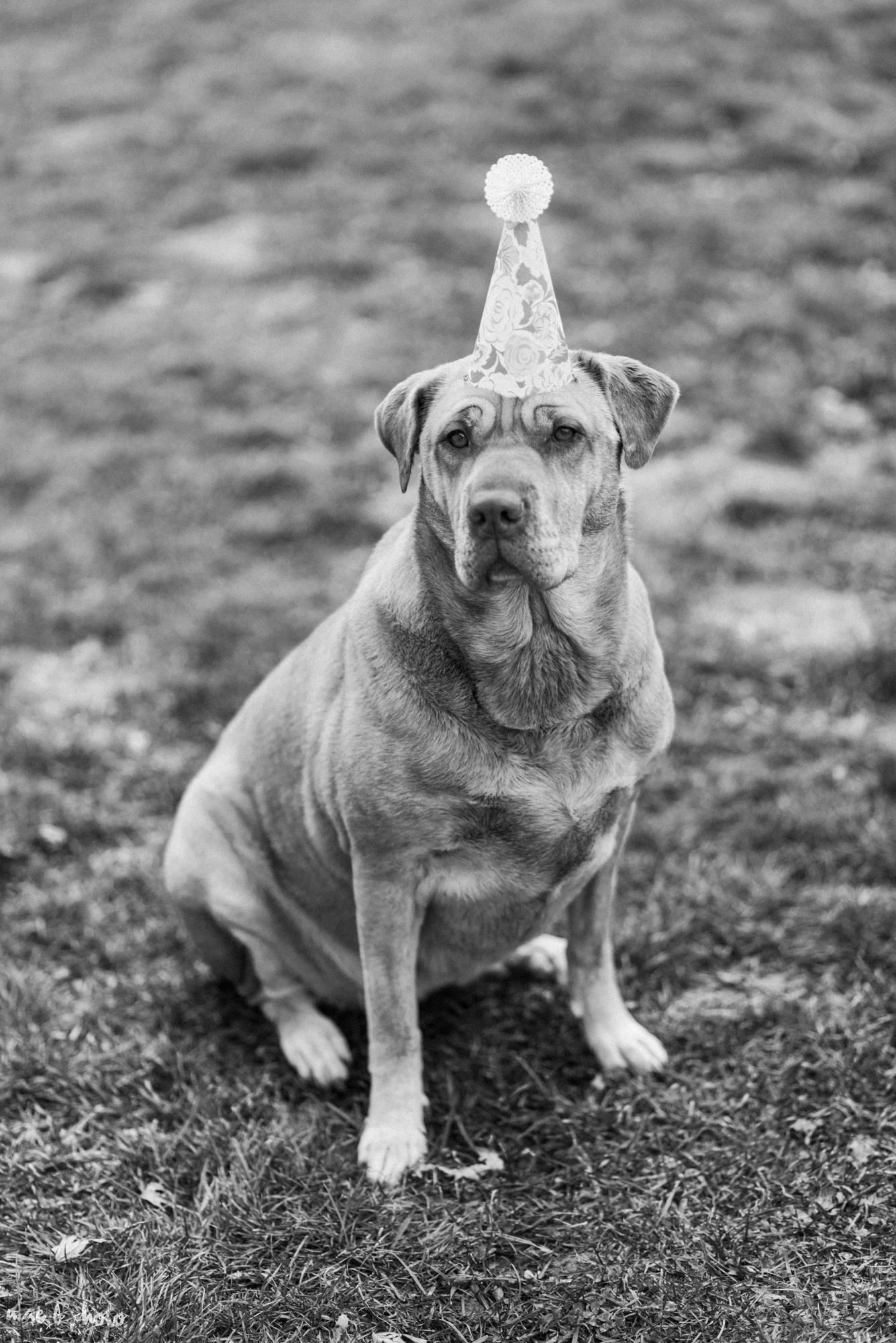 Meat & Sophie's 5th birthday party in youngstown ohio-31.jpg