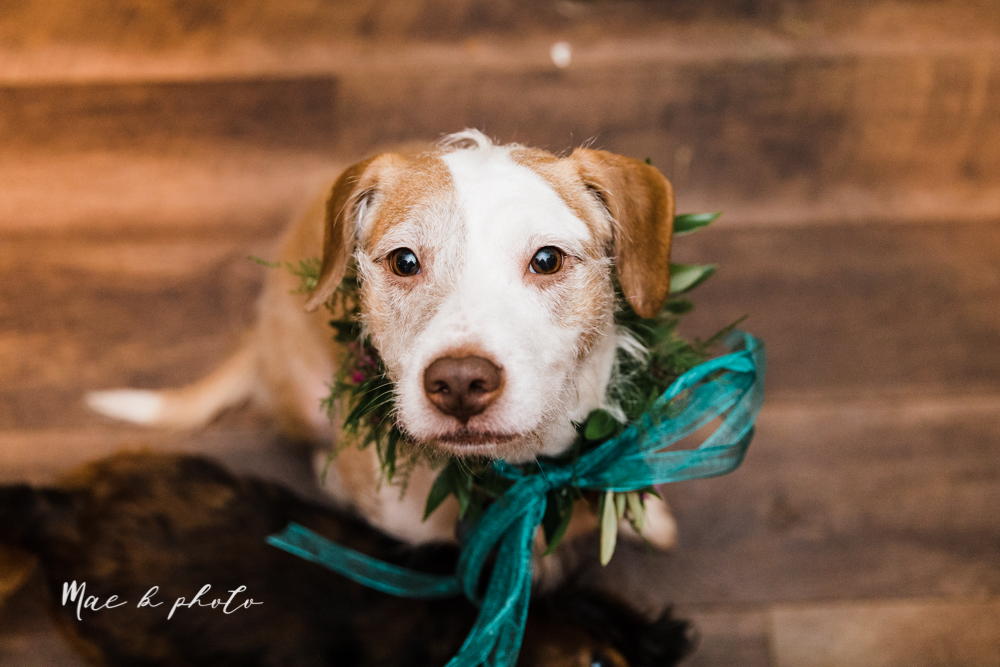 kaitlin and brad's offbeat winter harry potter the hobbit lord of the rings themed wedding at mapleside lodge in brunswick ohio photographed by youngstown wedding photographer mae b photo-209.jpg