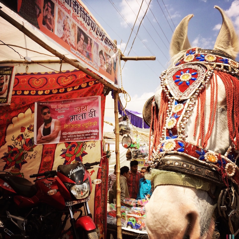 Horse at the Jodphur Fair