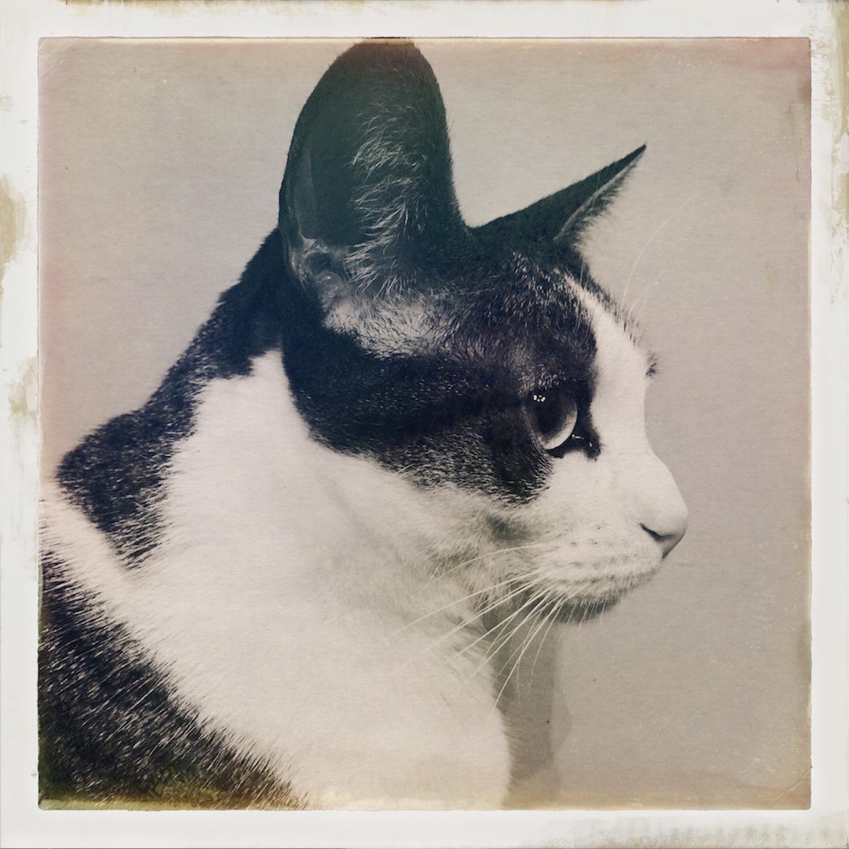 Portrait of Niko