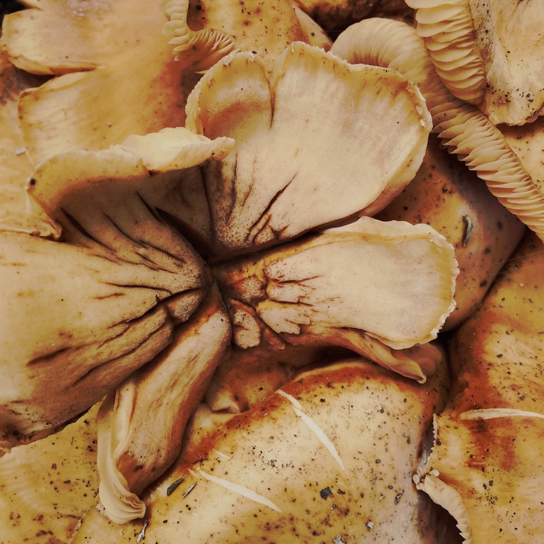 Sexy Mushrooms