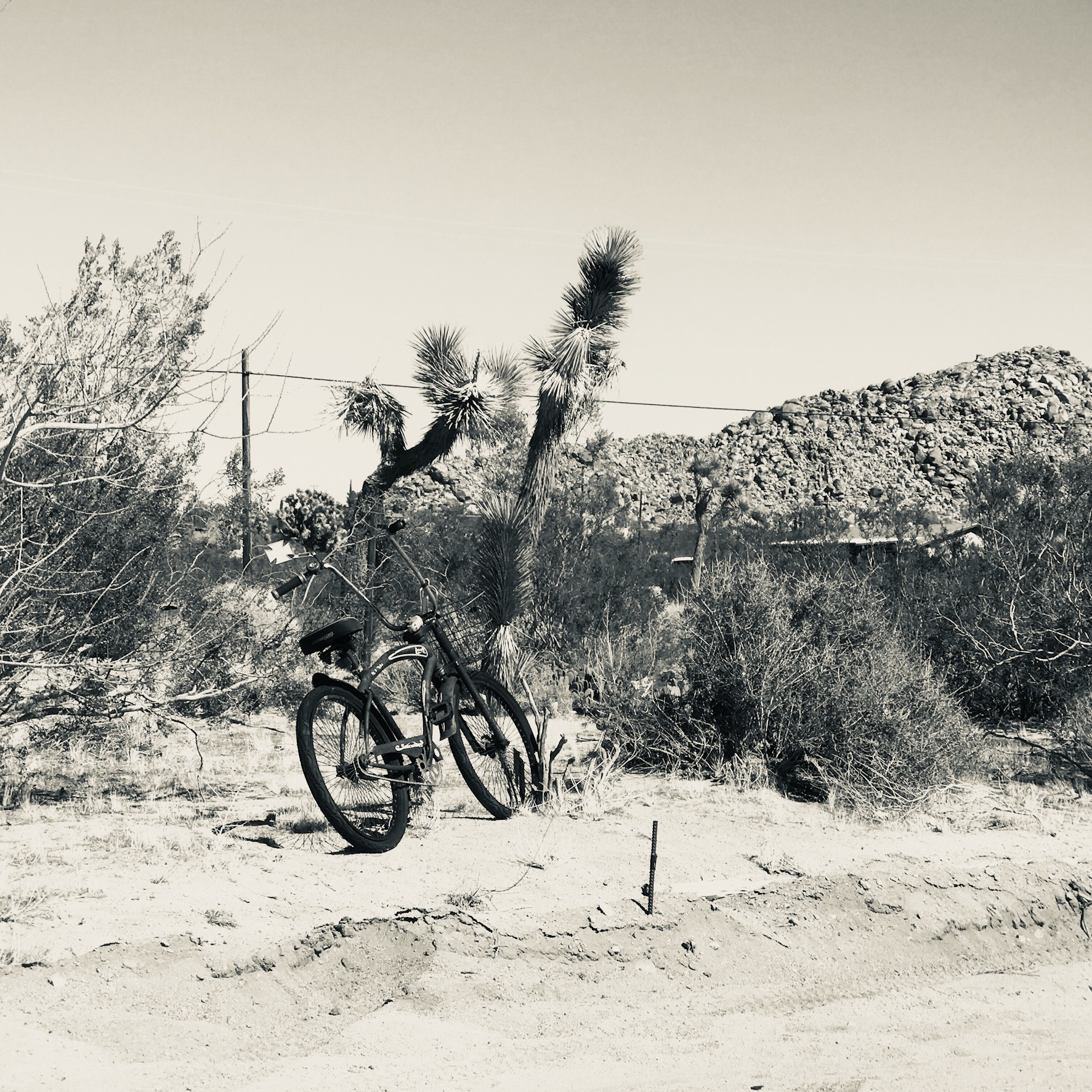 Bicycle in Joshua Tree
